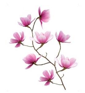 Vinilo decorativo magnolias de ikea vinilos decorativos for Vinilos cristales ikea