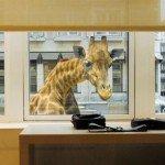 Una divertida jirafa en la ventana