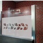 Caracolas marinas para la ducha