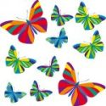 Kit de mariposas