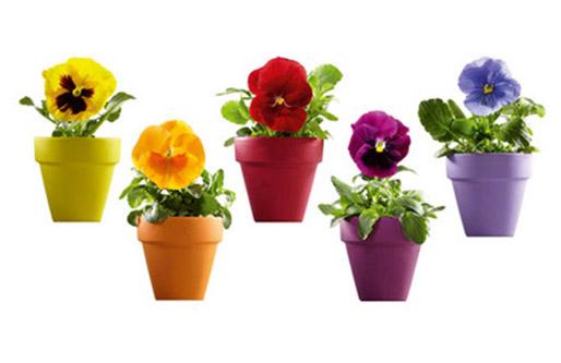Macetas con flores vinilo bien floral vinilos decorativos for Fotos de plantas en macetas