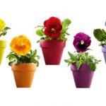 Macetas con flores, vinilo bien floral